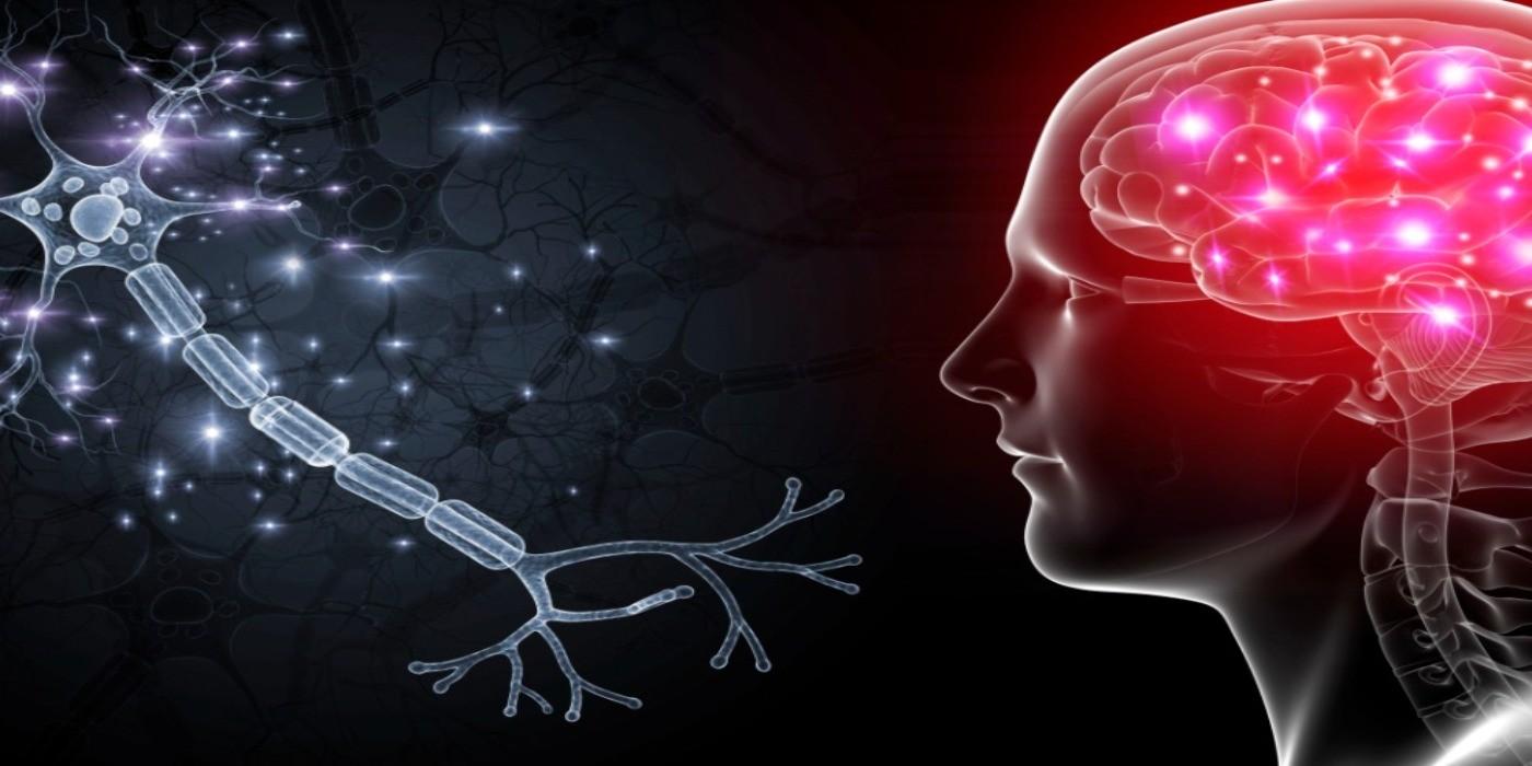 messagerie cerveau