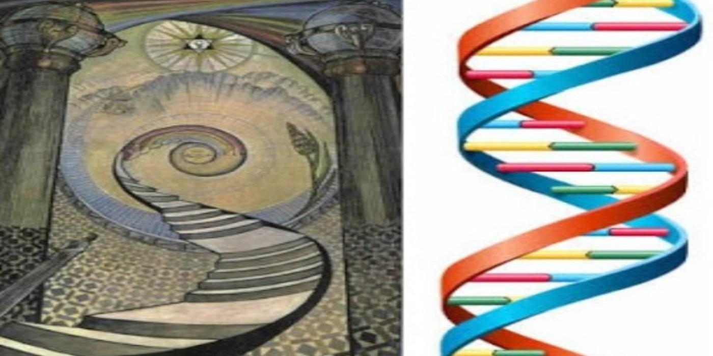 ADN structure